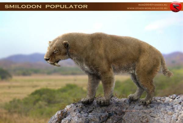 А кости у смилодона мощнее медвежьих.  Телосложение у него было не кошачьим.  Вот альтернативный вариант.